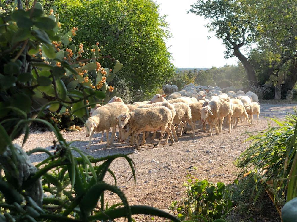 Mallorca-Urlaub mit Kindern und Tieren auf dem Bauernhof